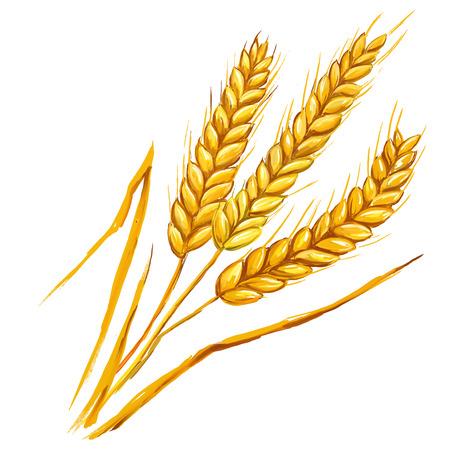 espiga de trigo: Espigas de trigo ilustraci�n vectorial dibujado a mano acuarela pintada
