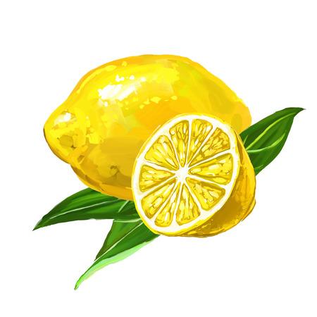 limonero: fruta de lim�n Ilustraci�n vectorial dibujado a mano acuarela pintada