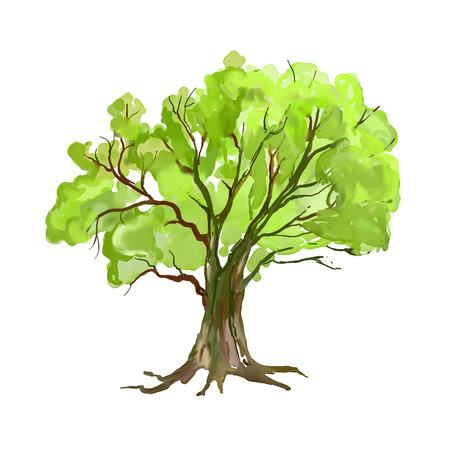 feuille arbre: Arbre illustration tir�e par la main aquarelle peinte
