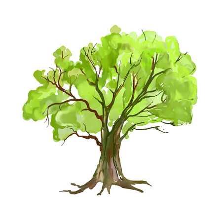 on the tree: Tree vector illustration  hand drawn  painted watercolor