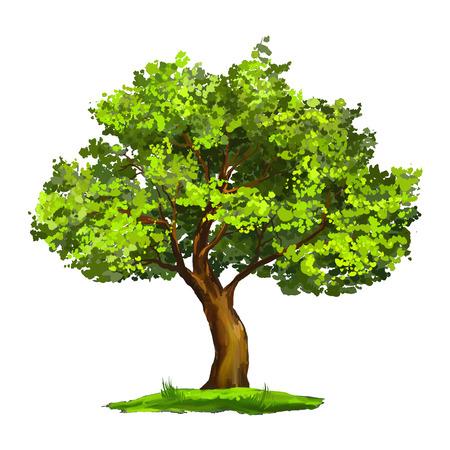 Árbol ilustración vectorial dibujado a mano acuarela pintada Ilustración de vector
