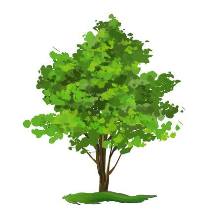 tronco: �rbol ilustraci�n vectorial dibujado a mano acuarela pintada Vectores