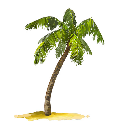 palmier: Palm tree vector illustration tir�e par la main aquarelle peinte