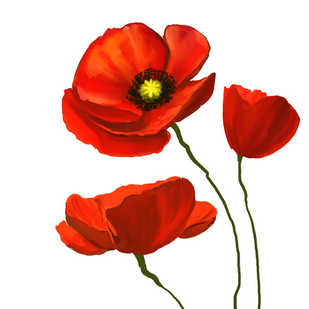poppies vector illustration  hand drawn  painted watercolor Çizim
