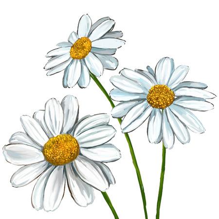 dessin fleurs: daisy illustration tirée par la main aquarelle peinte