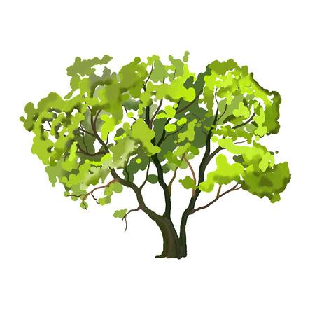 Baum Vektor-Illustration Hand gezeichnet Aquarell gemalt Standard-Bild - 38911091
