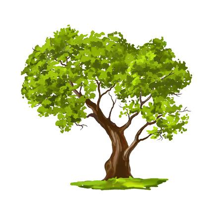 oxygen: Árbol ilustración vectorial dibujado a mano acuarela pintada Vectores