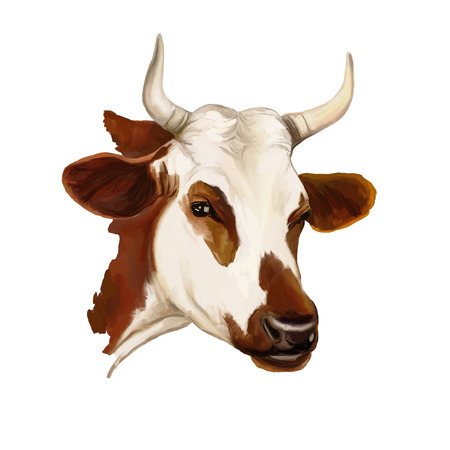 cow vector illustration  hand drawn  painted watercolor Çizim