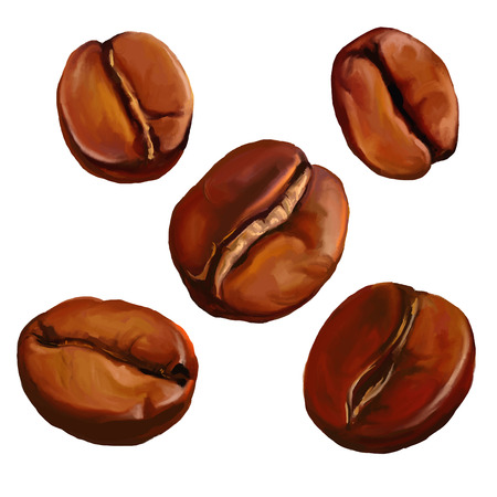 coffee beans vector illustration  hand drawn  painted watercolor Ilustração