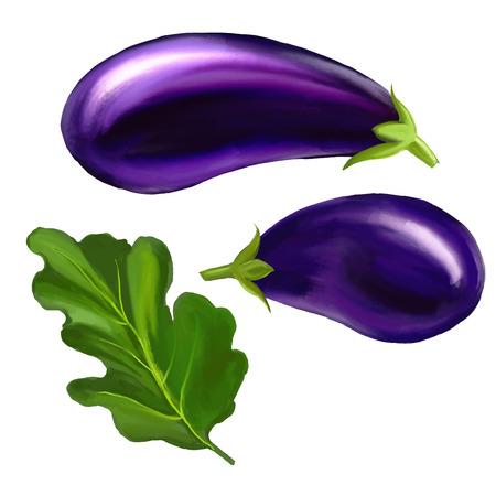 aubergine: Eggplant  vector illustration  hand drawn  painted watercolor Illustration