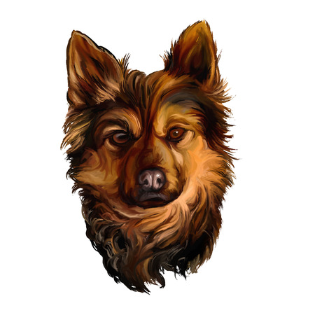 painted dog: dog vector illustration  hand drawn  painted watercolor