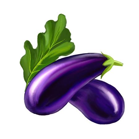 aubergine: Eggplant  illustration  hand drawn  painted watercolor