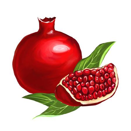 vrucht granaatappel vector illustratie hand getekend geschilderd watercol Stock Illustratie