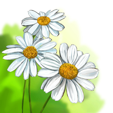 daisy vector illustration  hand drawn  painted watercolor Çizim