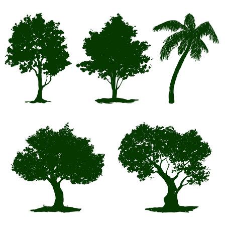 abundance: set tree  illustration  hand drawn  painted