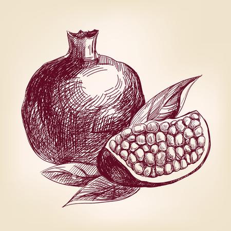 frutas tropicales: boceto dibujado realista llustration vector fruta de la granada de mano