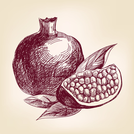 pomegranate juice: fruit pomegranate hand drawn vector llustration realistic sketch Illustration