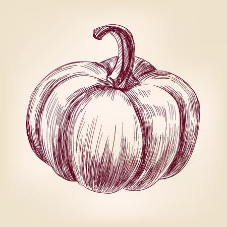 vintage drawing: Pumpkin hand drawn vector llustration realistic sketch