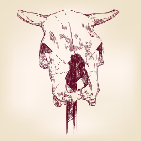 cranial skeleton: cow skull hand drawn vector llustration realistic sketch