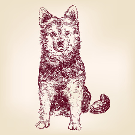 whelp: dog hand drawn vector llustration realistic sketch