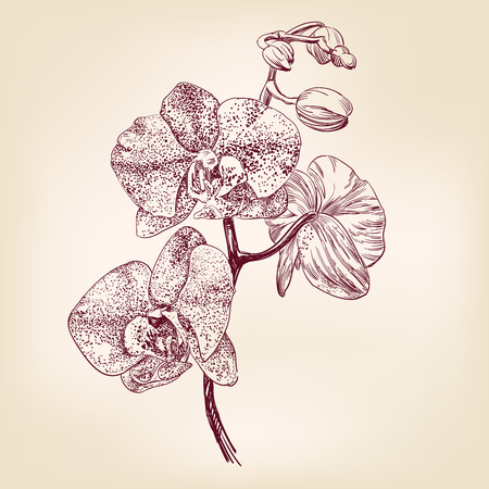 floral orchid hand drawn illustration realistic sketch Ilustracja