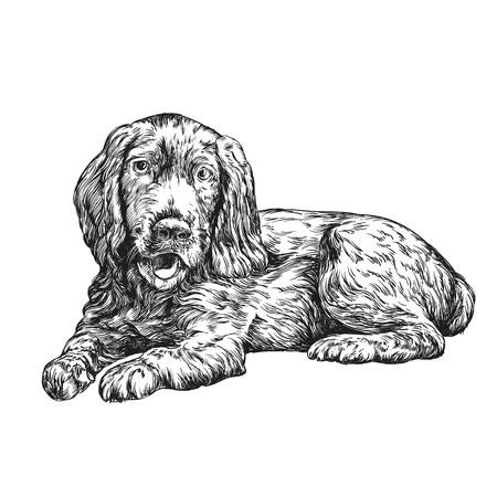 whelp: dog spaniel hand drawn vector llustration realistic sketch Illustration