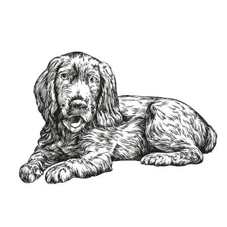 perro de aguas de dibujado a mano llustration vector esbozo realista Ilustración de vector