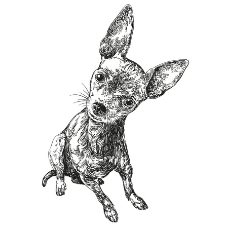 whelps: dog russian toy terrier hand drawn vector llustration realistic sketch Illustration