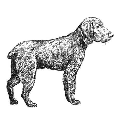 whelp: dog hunting hand drawn vector llustration realistic sketch
