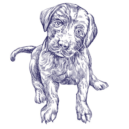 whelp: dog puppy hand drawn vector llustration realistic sketch Illustration