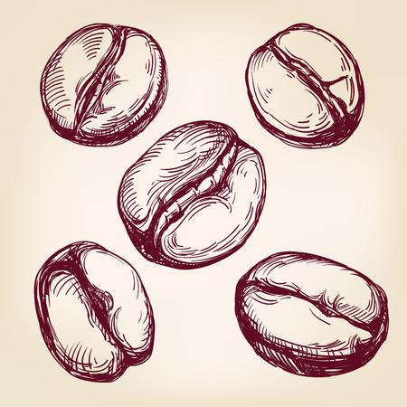 chicchi di caff?: chicchi di caffè set disegnati a mano illustrazione vettoriale schizzo realistico