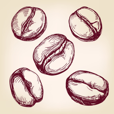 coffee beans: coffee beans set hand drawn vector illustration realistic sketch