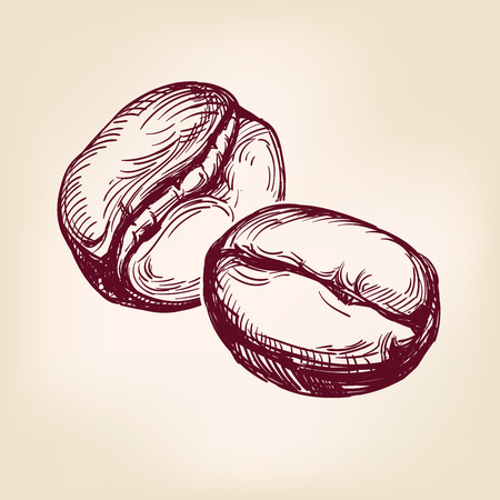 coffee beans sign hand drawn vector llustration realistic sketch Ilustração