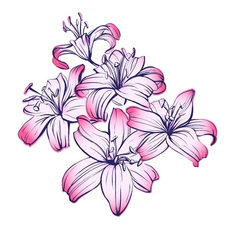 blooming: floral blooming lilies hand drawn illustration sketch