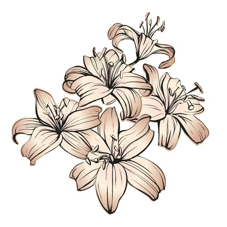floral blooming lilies hand drawn illustration sketch