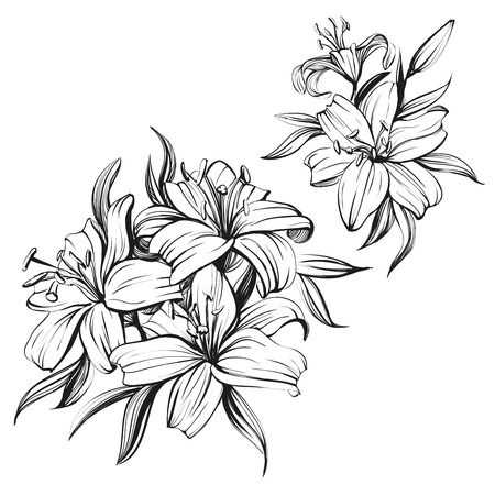 floral blooming lilies set hand drawn illustration sketch