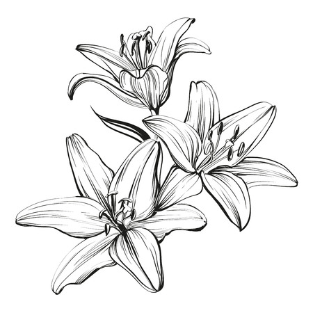 flor de lis: lirios en flor floral dibujado a mano ilustración boceto Vectores