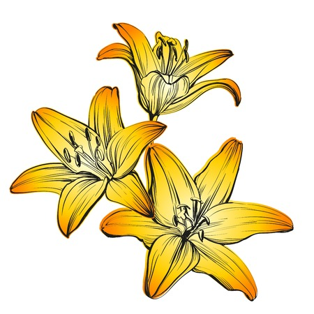pencil drawings: floral blooming lilies hand drawn illustration sketch