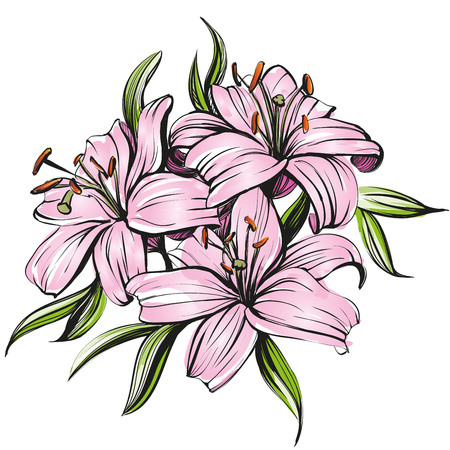pencil drawing: floral blooming lilies illustration hand drawn painted watercolor sketch