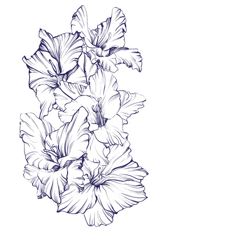 blooming: floral blooming gladiolus hand drawn illustration sketch Illustration