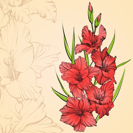 pistil: floral blooming gladiolus hand drawn vector illustration sketch