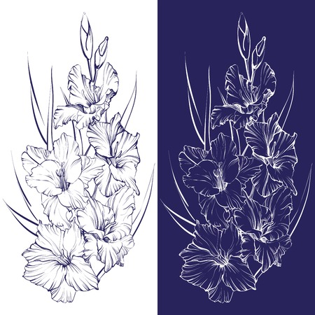 floral blooming gladiolus hand drawn vector illustration sketch