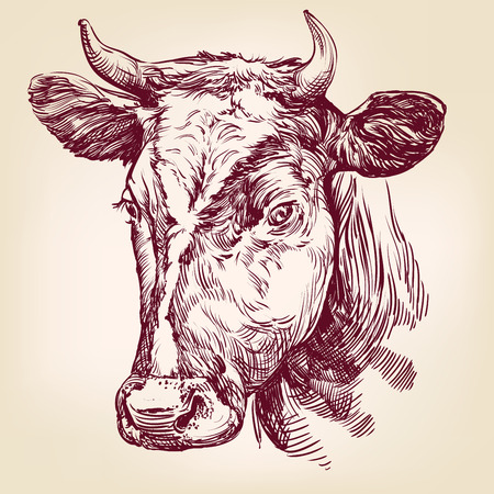 bull pen: cow hand drawn vector llustration realistic sketch