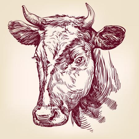 Kuh von Hand gezeichneten Vektor llustration realistische Skizze