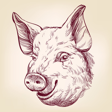 bacon art: pig hand drawn vector llustration realistic sketch Illustration