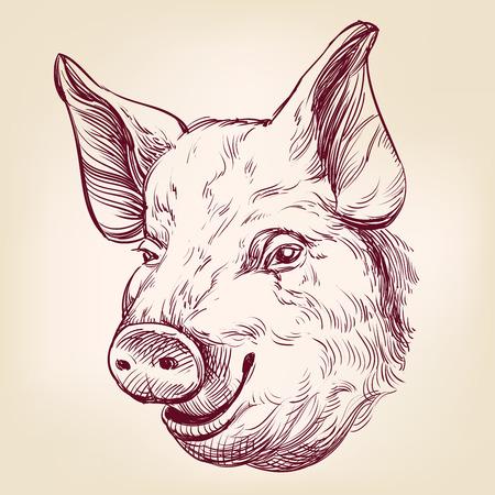 pig hand drawn vector llustration realistic sketch Illustration