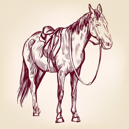 arabian: horse hand drawn vector llustration realistic sketch