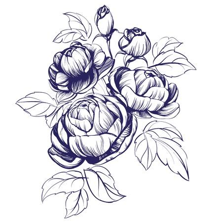 floral blooming rose branch vector illustration sketch Illustration