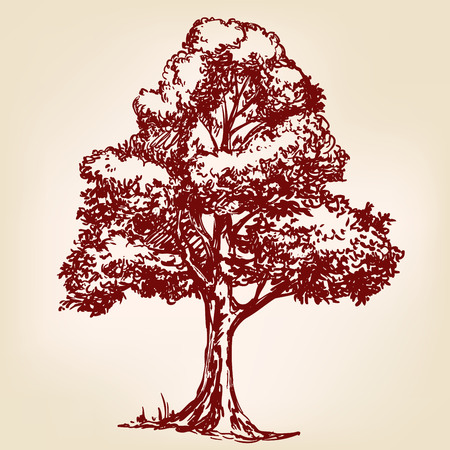 conservancy: Tree hand drawn vector llustration realistic sketch