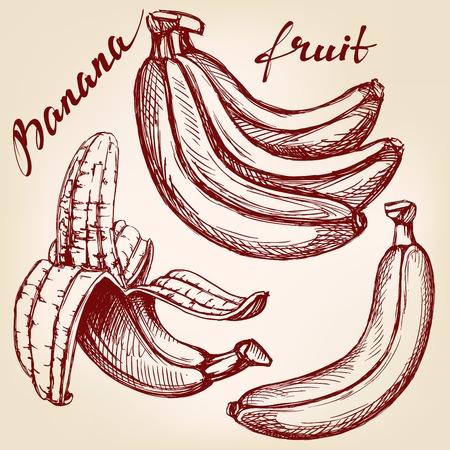 alfa: Bananas fruit set hand drawn vector llustration realistic sketch Illustration